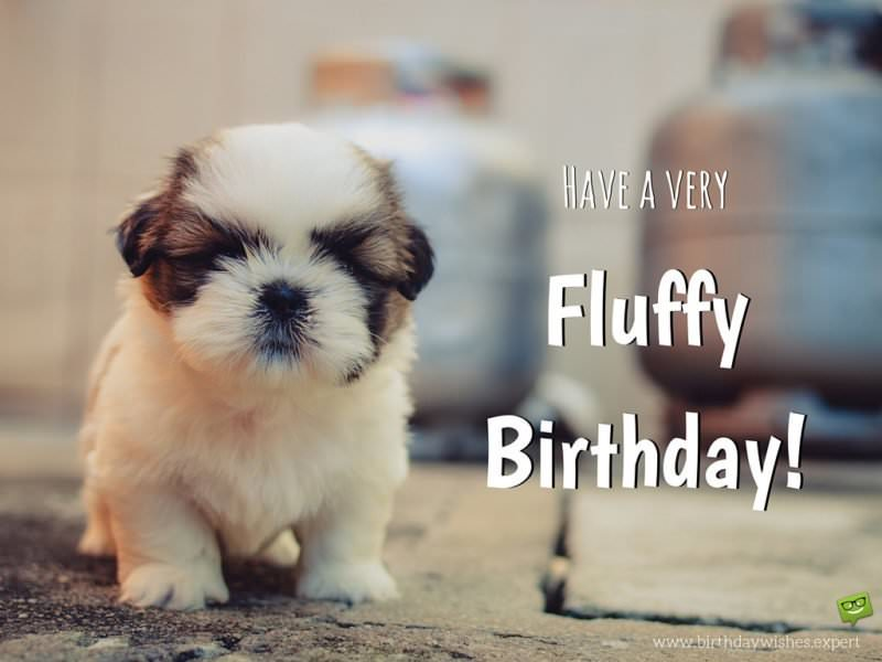 Have a very fluffy birthday!