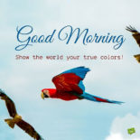 Good Morning inspiration quote for friends on picture of colorful parrot.