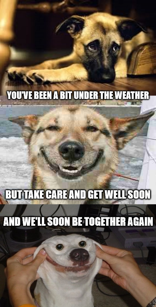 Sad Dog Happy Dog Happiest Dog Get Well Soon Meme.