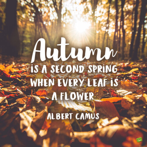Albert Camus quote you can use as an autumn caption.
