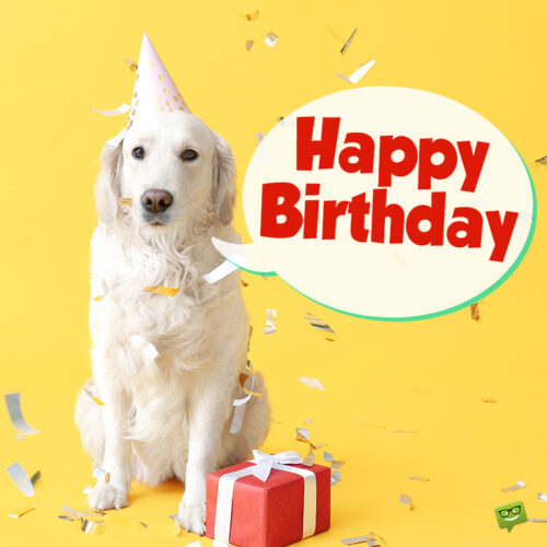 Birthday image with dog.
