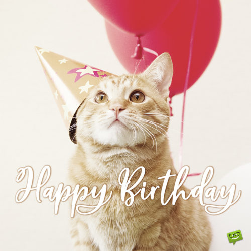 Cute birthday wish on image with cat for wishing on social media, emails and chats.