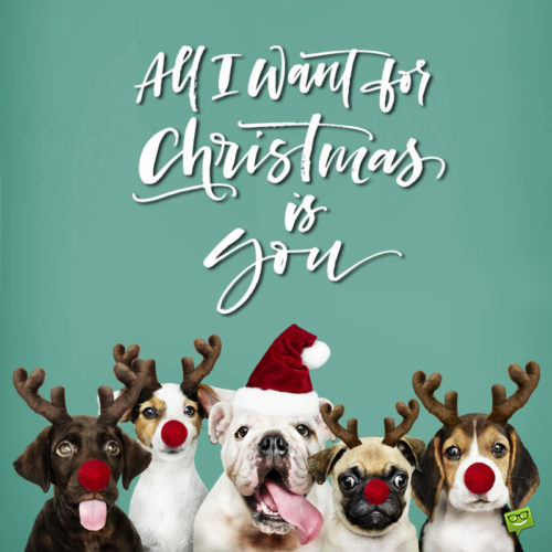 Merry Christmas wish on funny image with dogs.