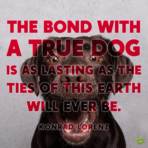 Dog love quote to note and share.