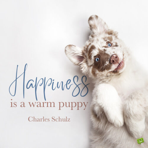 Cute dog quote to note and sharel.