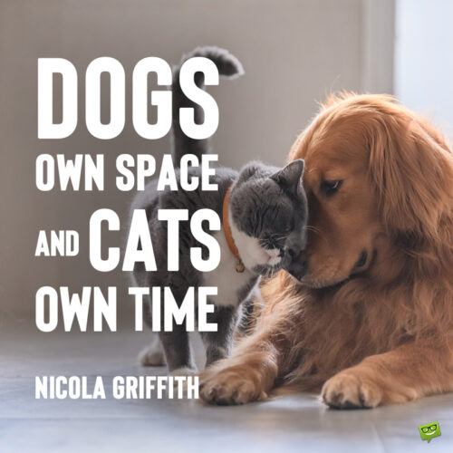 Cats and dogs quote to note and share.