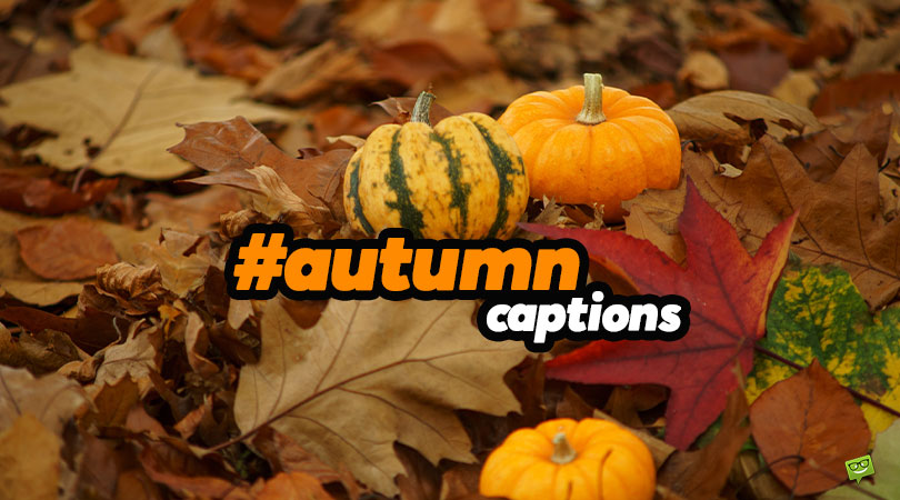 51 Fall Captions for your Colorful Autumn Pics