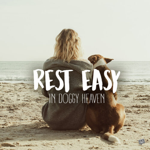 Final Goodbye Quote to a dog.