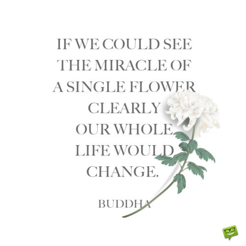 Flower quote about life for contemplation.