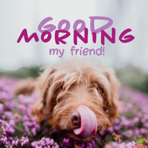Good morning image for friend.
