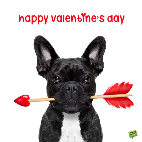 Funny image with dog for Valentine's day.