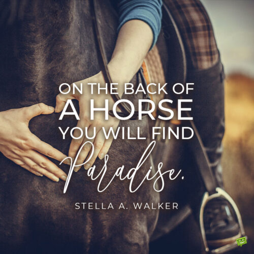 Horse quote to note and share.