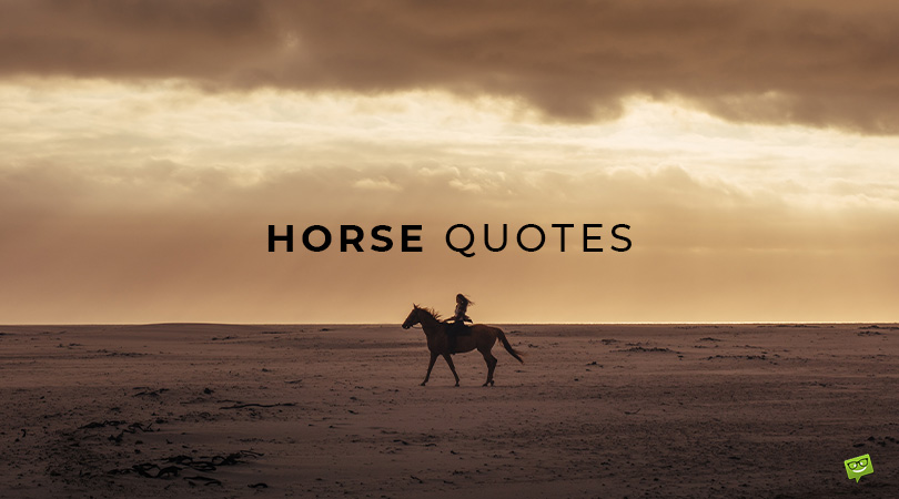 Animal Pride | 135 Horse Quotes to Make You Admire Horses