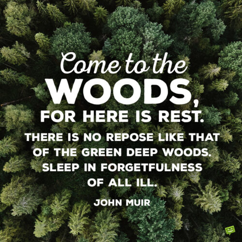 John Muir quote about the woods to give you food for thought.