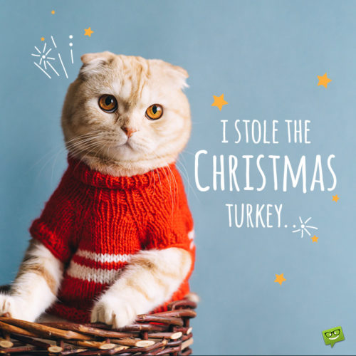 Funny Christmas picture with cat.