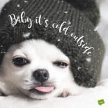Funny Christmas picture with dog.