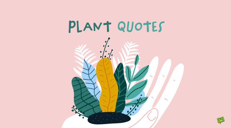 77 Plant Quotes About Those Green Friends
