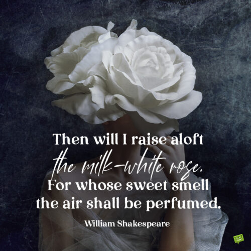 White rose quote to share or use as caption.