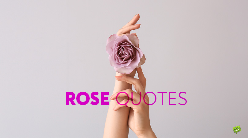 Symbols of Everything Beautiful and Pure | 192 Rose Quotes