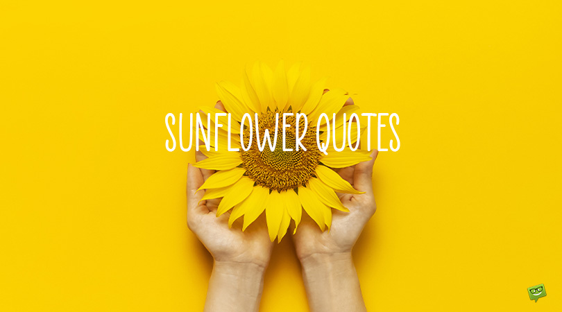 Seeds of Love   100+ Sunflower Quotes