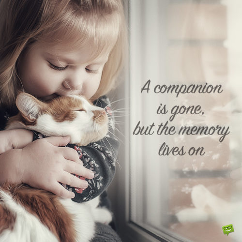 Sympathy quote for loss of a pet on image with girl hugging a cute kitten.