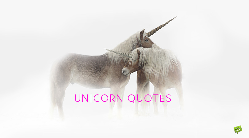 86 Fantastic Unicorn Quotes to Help You Fight Stereotypes