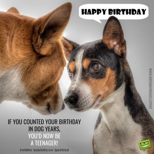 If you counted your birthday in dog years, you'd now be a teenager. Happy Birthday.