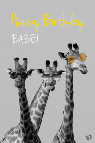 Happy Birthday Babe Funny Giraffes.