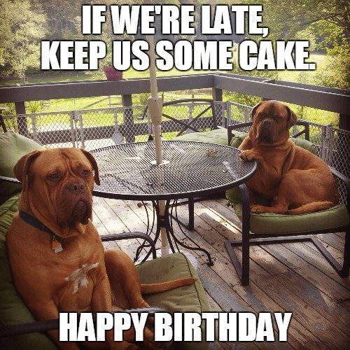 Funny Birthday Meme with dogs taking it easy.