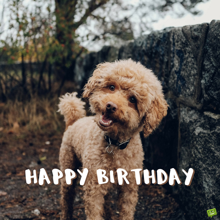 Tremendous Happy Birthday Images For Facebook Pinterest Other Networks Funny Birthday Cards Online Drosicarndamsfinfo