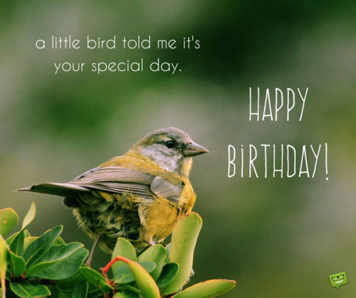 A little bird told me it's your special day. Happy Birthday!