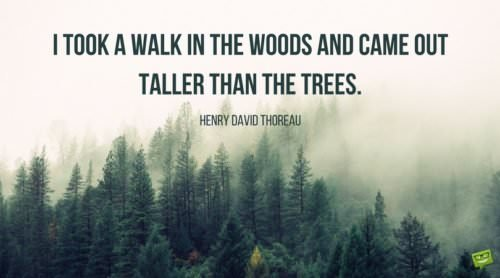 I took a walk in the woods and came out taller than the trees. Henry David Thoreau.