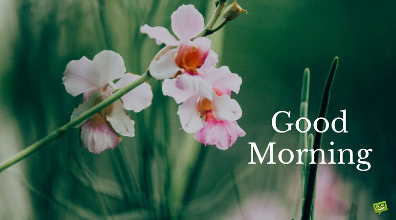 24 Good Morning Cards to Help you Start the Day