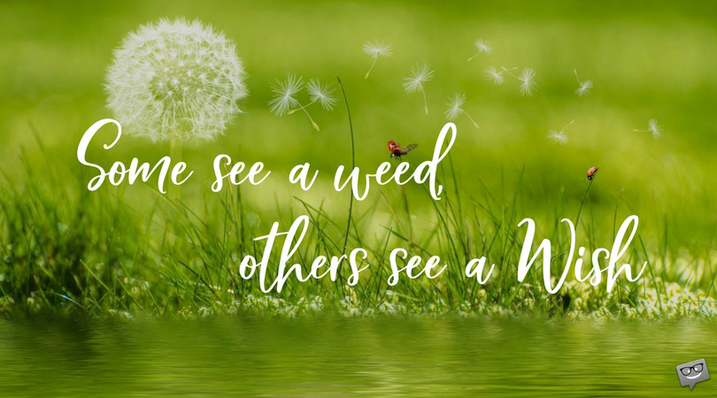 Some see a weed, others see a wish.