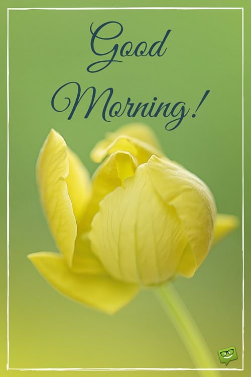Start your day with a smile floral cards good morning mightylinksfo