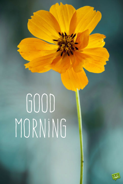 Good morning images flowers yellow beautiful good morning flower good morning images flowers yellow start your day with a smile floral cards mightylinksfo