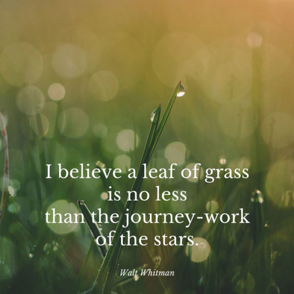 I believe a leaf of grass, is no less than the journey-work of the stars. Walt Whitman