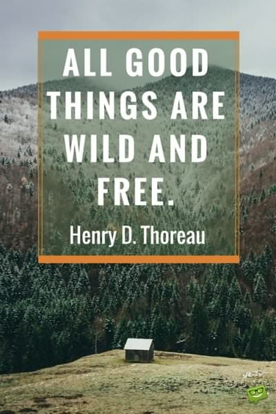 All good things are wild and free.  Henry D. Thoreau.