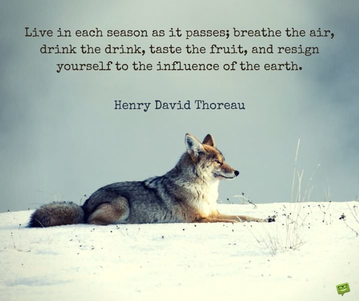 Live in each season as it passes; breath the air, drink the drink, taste the fruit and resign yourself to the influence of the Earth. Henry David Thoreau.