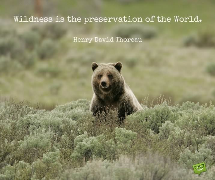 Wildness is the preservation of the World. Henry David Thoreau.