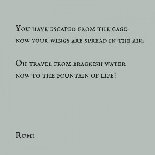 You have escaped from the cage. Now your wings are spread in the air. Oh, travel from brackish water, now, to the fountain of life!