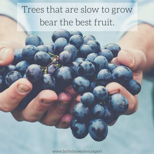 Trees that are slow to grow bear the best