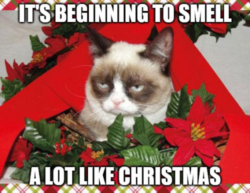 Beginning to smell a lot like Christmas - Grumpy Cat Christmas meme