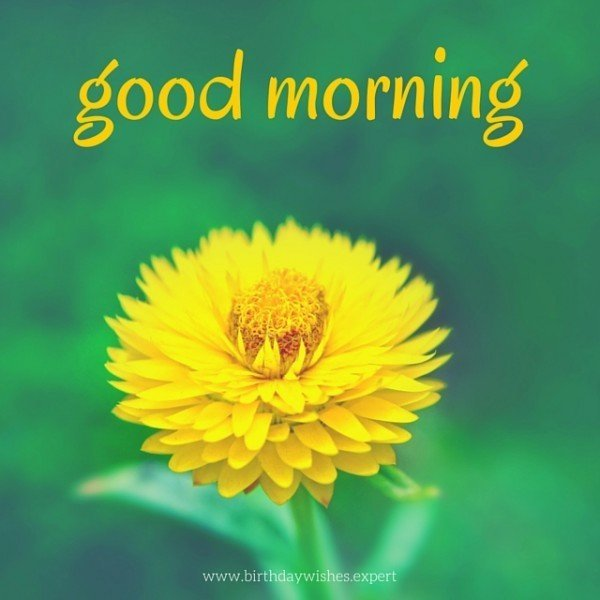 Good Morning, Have a wonderful day!