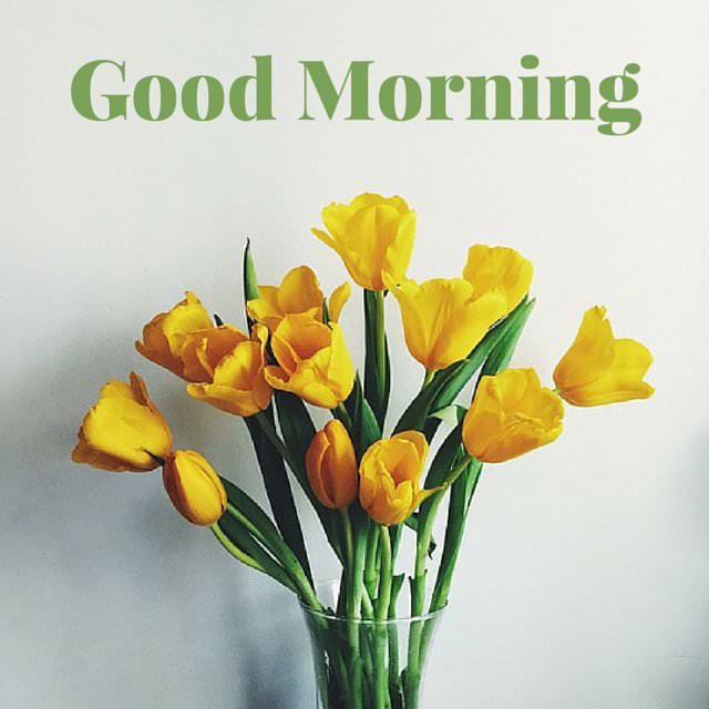 Good Morning Images With Yellow Flowers Hd Flowers Healthy