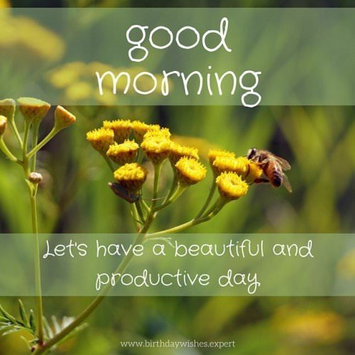 Good Morning, let's have a beautiful and productive day.