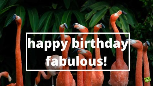 Happy Birthday, Fabulous!