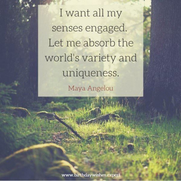 I want all my senses engaged. Let me absorb the world's variety and uniqueness. Maya Angelou