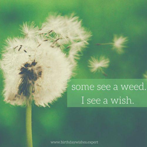 Some see a weed. I see a wish.