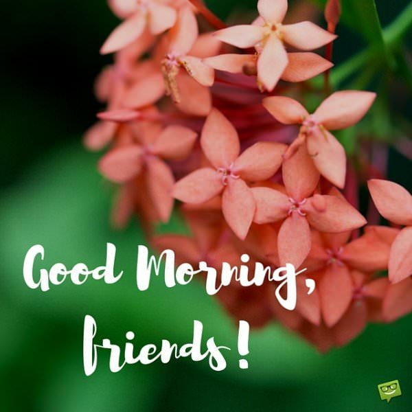 Good Morning Beautiful Red Flowers : Time to start the day good morning images